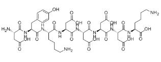 FLAG peptide Chemical Structure